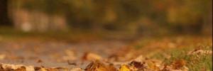 Вдохновляемся: ностальгические и атмосферные песни про осень, которые точно знают все!