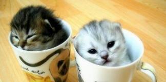 Фотографии котят повышают работоспособность
