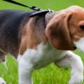 Гуляйте с собакой с пользой для фигуры