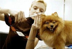 Стрижка и правила ухода за шерстью собак