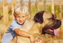 Полиция нашла потерявшегося ребенка по следам собаки, которая от него не отходила