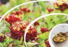 Сила в адаптогенах: 6 растительных веществ против стресса и усталости
