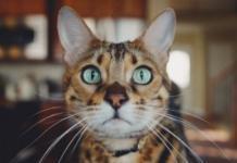 Тест ко Дню кошки: найди правдивые заголовки