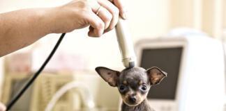 Для чего нужно УЗИ собакам и кошкам?