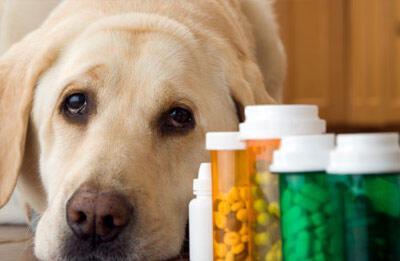 Лекарства для животных в интернет-магазине