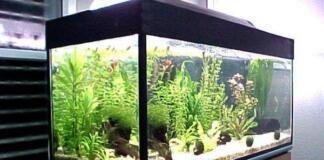 Какие лампы стоит выбирать для аквариума?